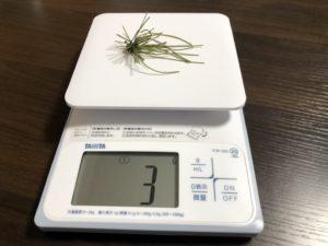 100均スモラバの自重を測っている画像です。