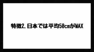h3見出し6「特徴2,日本では平均50cmがMAX」の装飾画像