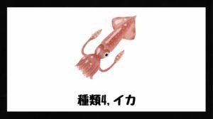 イカの画像