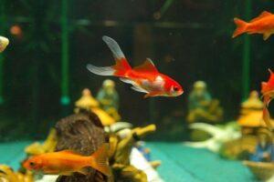 小魚の写真