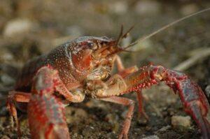 甲殻類の写真