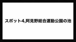 h3見出し4「阿見野総合運動公園の池」の装飾画像